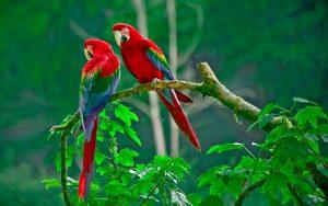 Guest Birds