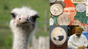 Pakistan and Ostrich Eggs